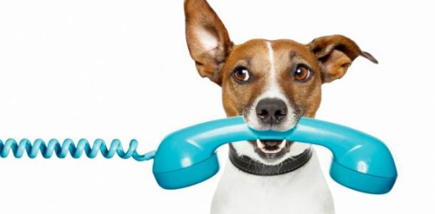 Как говорить на английском по телефону?
